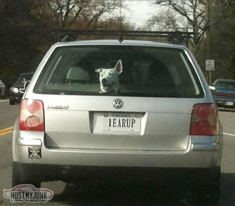 one-ear-up-license-plate.jpg